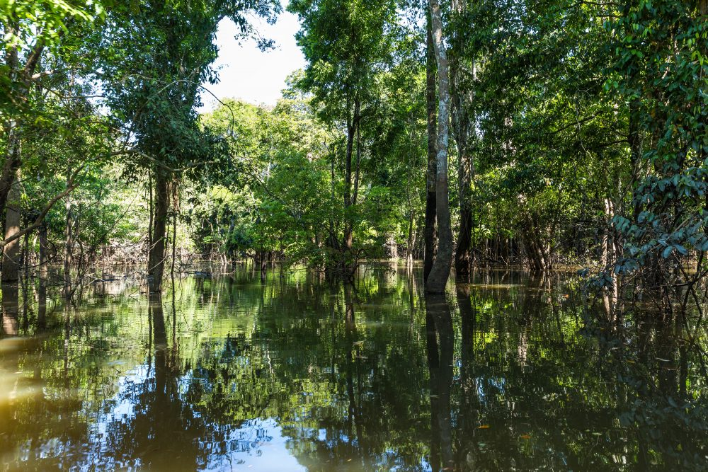 Flooded forest in the Amazon known as Igapó.