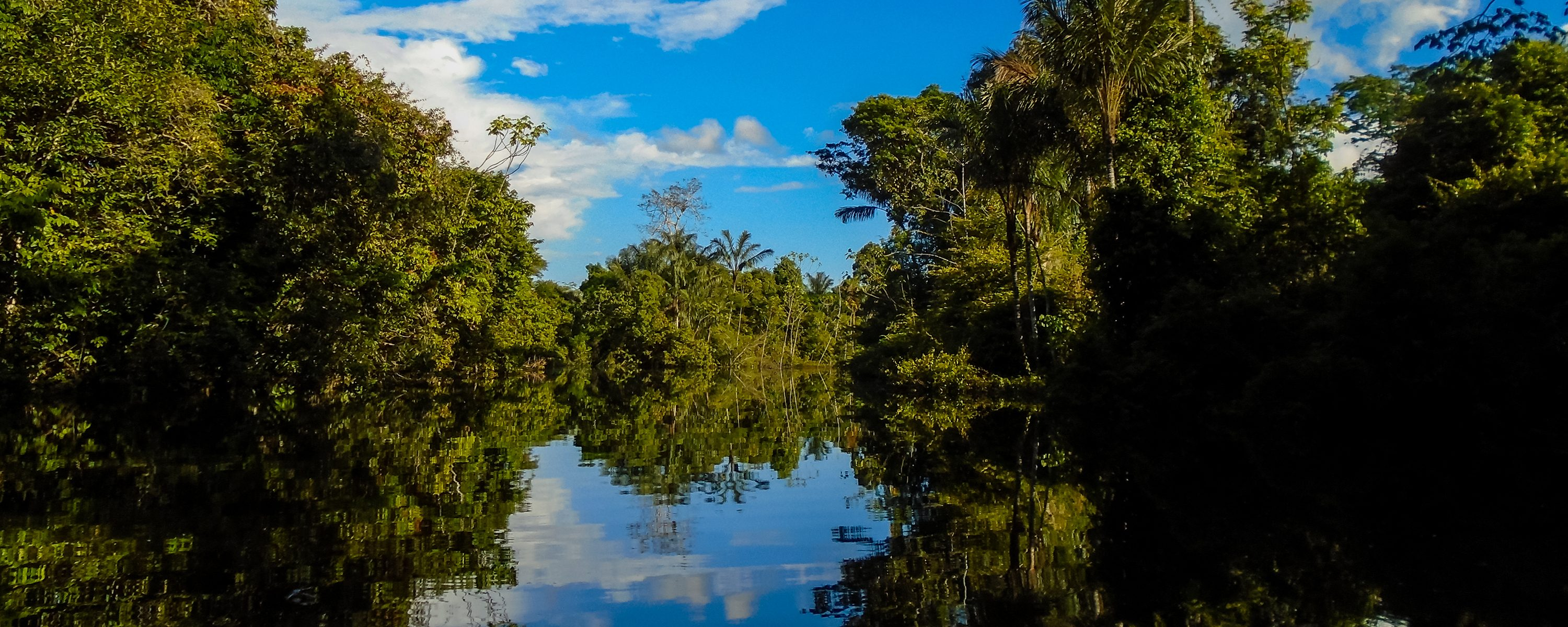 The trees reflect off the dark waters of the Rio Negro.