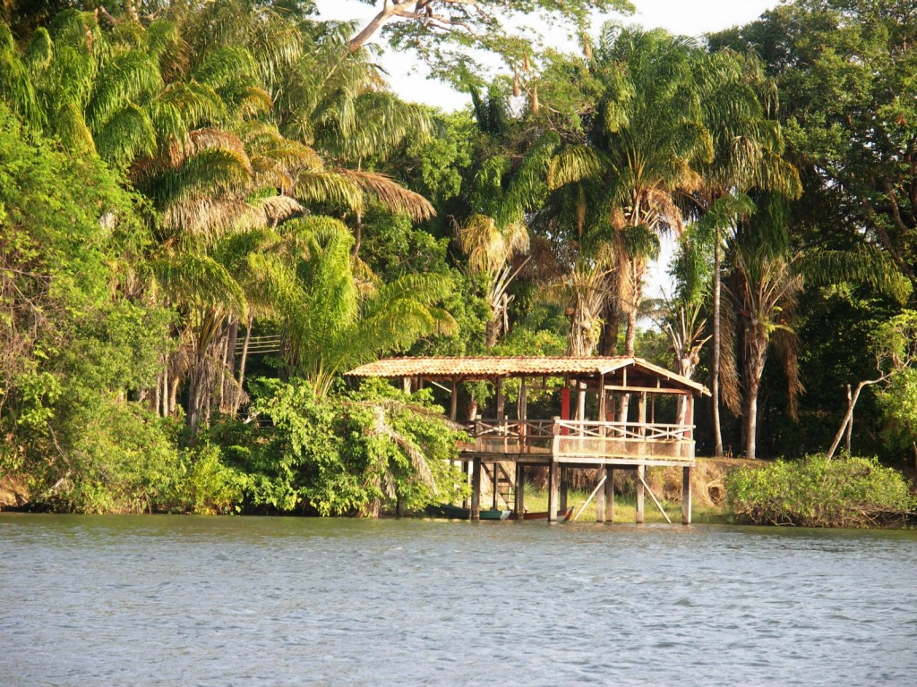 A house on stilts at the edge of the Amazon river.