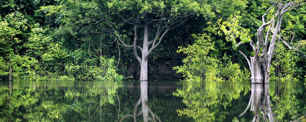 The green trees of the Amazon rainforest reflect off the Amazon river.