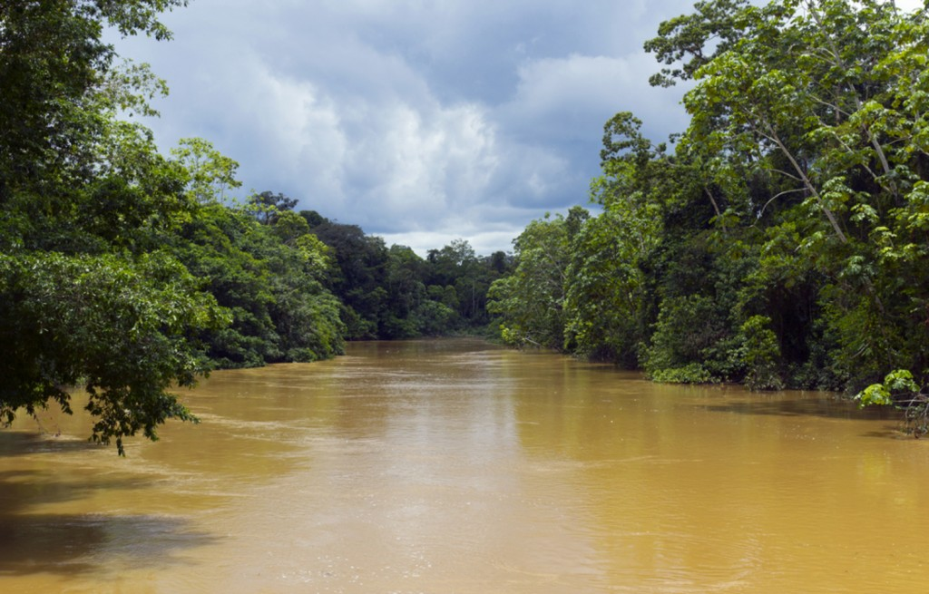 The rainforest reaches out over the Amazon river.