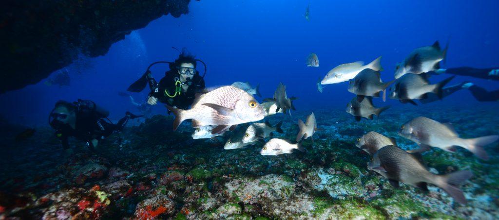 The marine life of Fernando de Noronha.