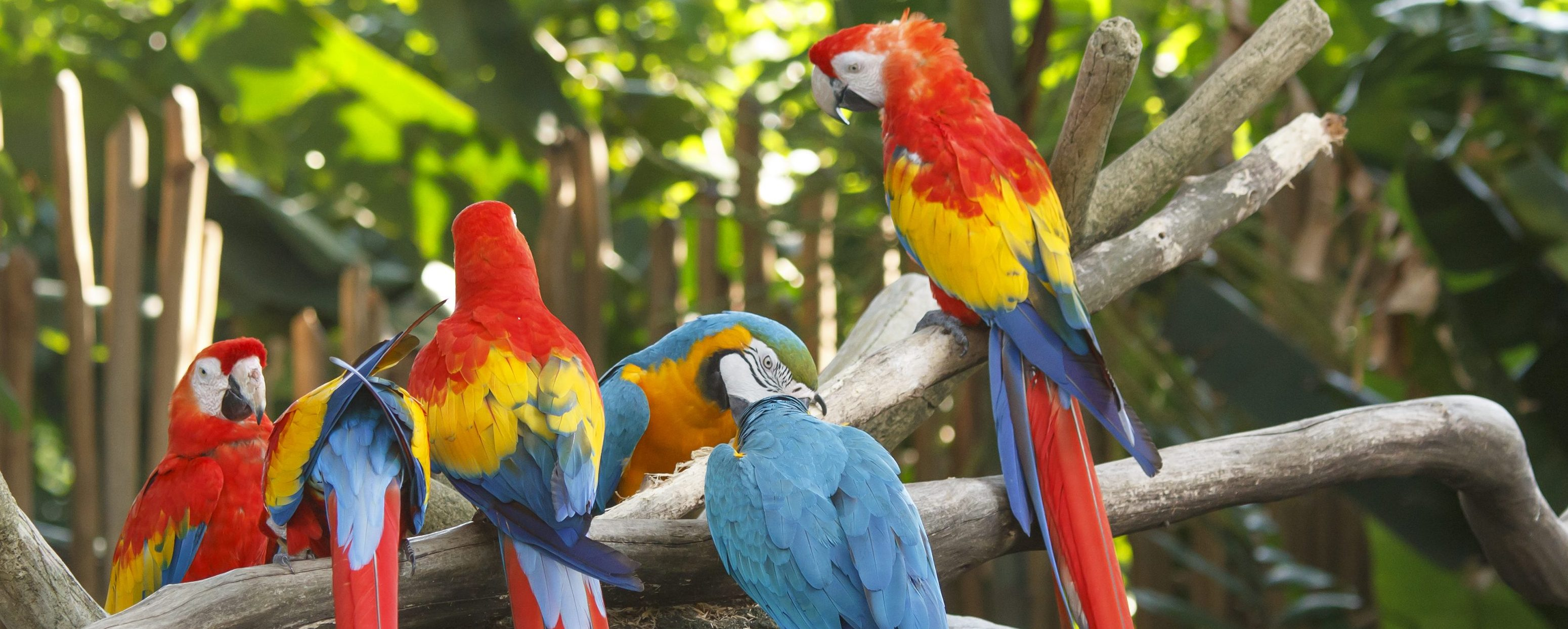 A few macaws sitting on a branch in the bird santuary at Iguassu.