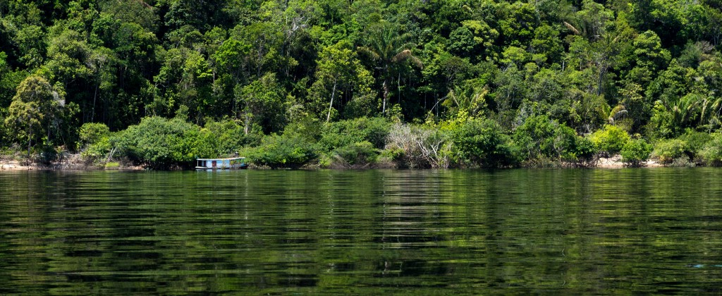 The lush green forest juts out over the banks of the Rio Negro in Amazonas.