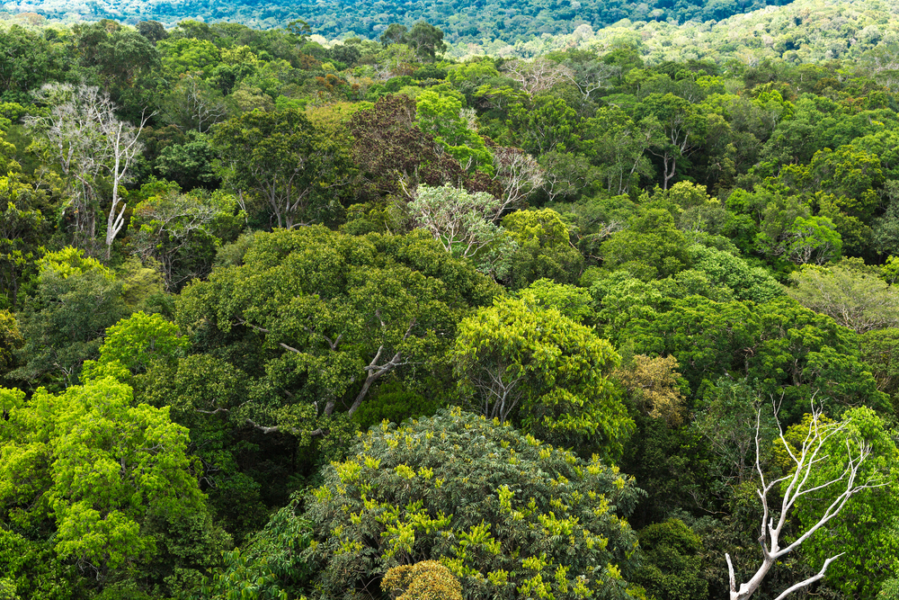 The Amzonian canopy from above, home to millions of different species of plants and animals.