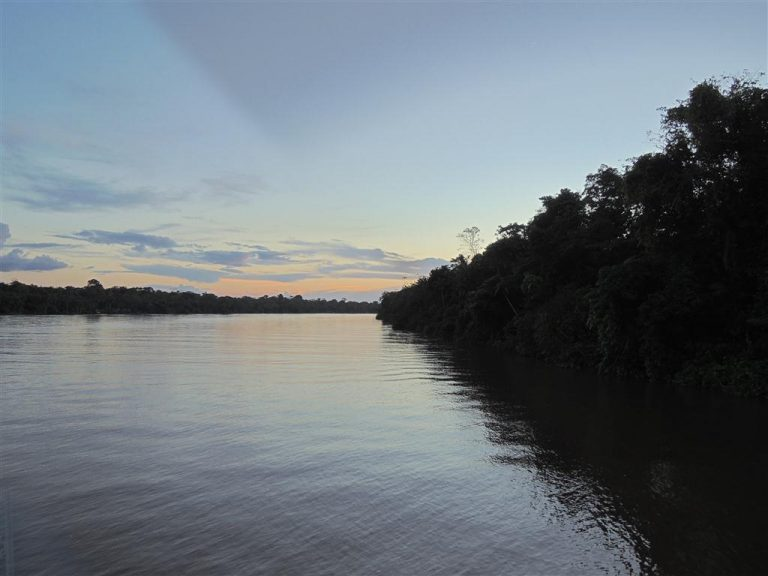 The Amazon river begins to awaken alongside the luxuriant forest.