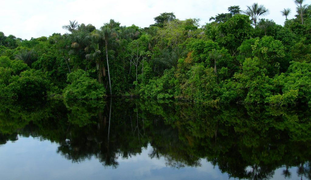 The trees of one of the mangroves on the Amazon river reflect of the dark waters.