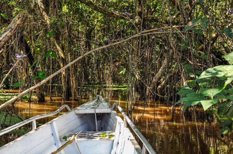 A shot from a canoe entering one of the flooded forests of the Amazon.