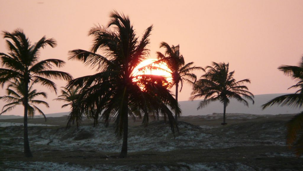 A beautiful sunset behind the palm trees in Brazil.