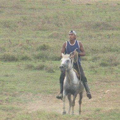 Cow-boy au travail sur l'île de Marajo